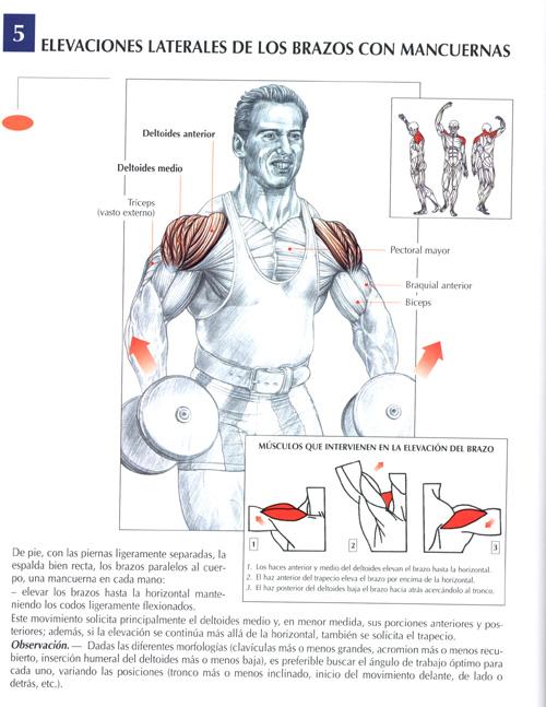 elevaciones-laterales-de-los-brazos-con-mancuernas